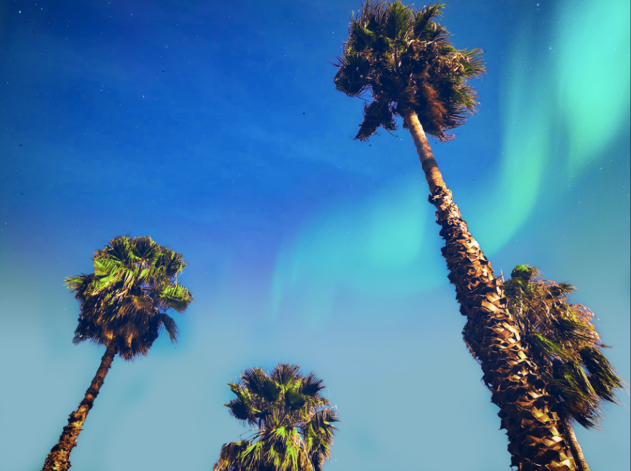 photo: Giuliphoto Visuals;desc:Palms of Palermo with the wonderful sky